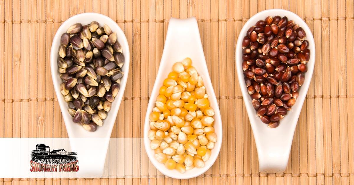 Popcorn 101 Butterfly Style, White Popcorn & Mushroom Style