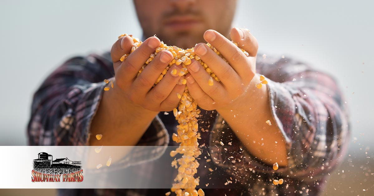 Where Do Popcorn Kernels Come From