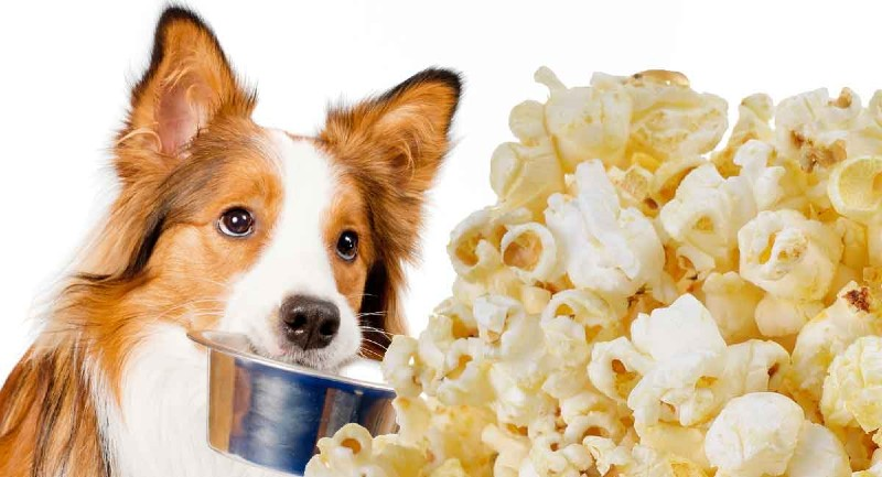 Can Dogs Eat Popcorn (1)